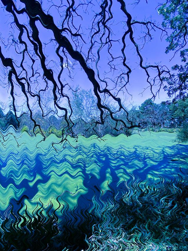 Halloween Pond Purple
