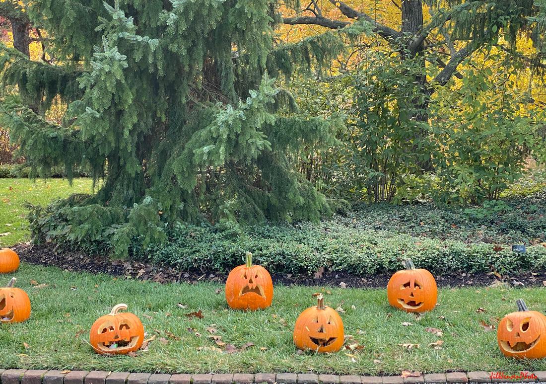 Botanic Garden Pumpkins, Glencoe, IL USA